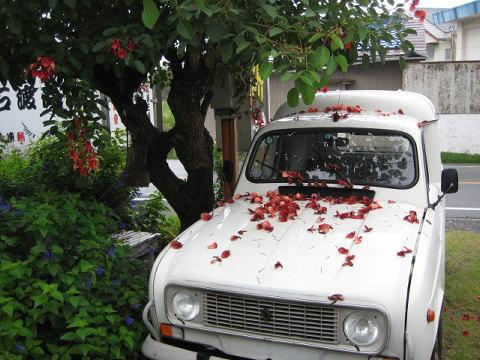 このまま走って赤い花をまき散らすのも梅雨の楽しみ。