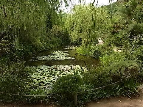直島の自然と共存するため美術館を地中に埋めた安藤忠雄。その地中美術館に向かう途中、ジヴェルニーのモネの庭の植生と睡蓮の池をコンパクトに再現したアプローチがあり、来館者はみなここで期待を増幅させる。