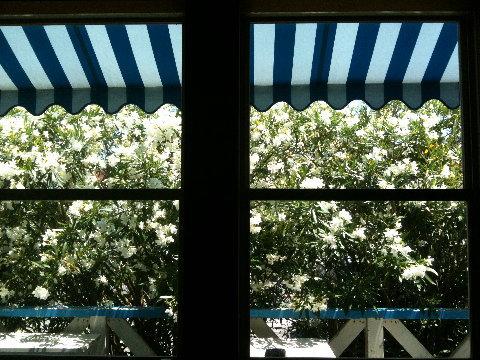 カウンターからふと外を見上げたら夏らしい景色だったのでi phoneでパチリ。