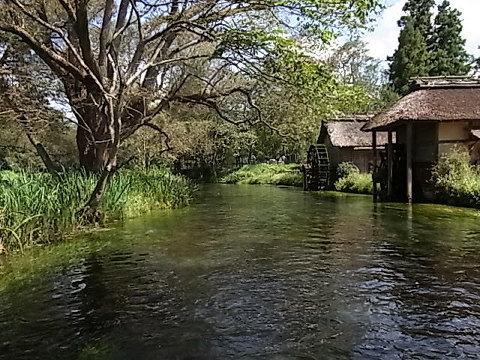 アルプスからの透き通った湧水で極上のワサビが育つ。日本の原風景。