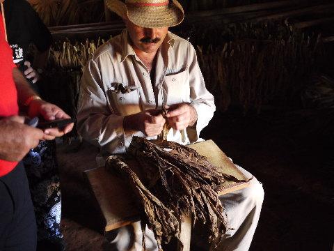 農家の渋いオジサンがシガーの巻き方を実演してくれた。