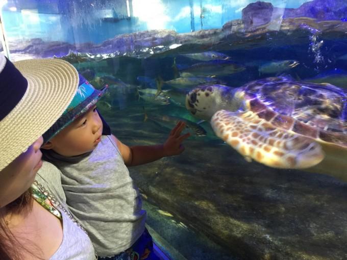 ヒナタくんと行った竜宮城、いや鴨川シーワールド。シャチのショーより海亀に驚いてました。楽しかったな!