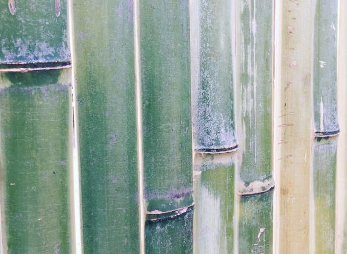 千倉には竹屋さんが二軒と竹工芸作家の松本破風さんがおり、竹の町でもあります。